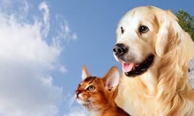 Controle de Endo e Ectoparasitos de cães e gatos