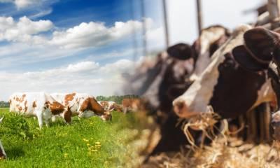 Nutrição de vacas em lactação